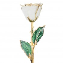 Cream 24kt Gold Dipped Rose