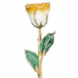 Goldenrod Swirl 24k Gold Dipped Rose